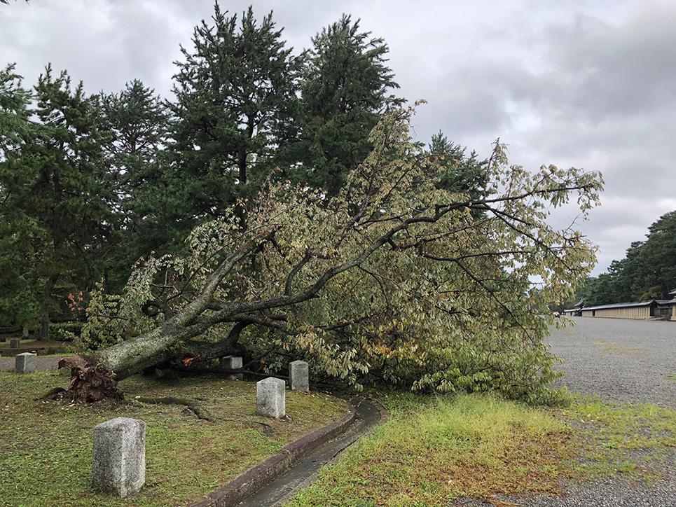 京都御所の倒木