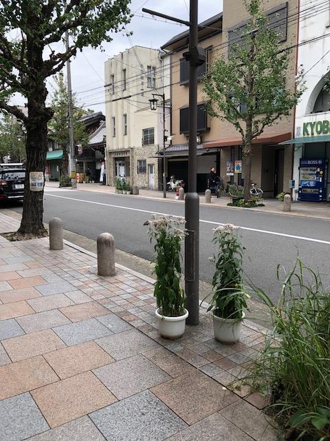 寺町通りの藤