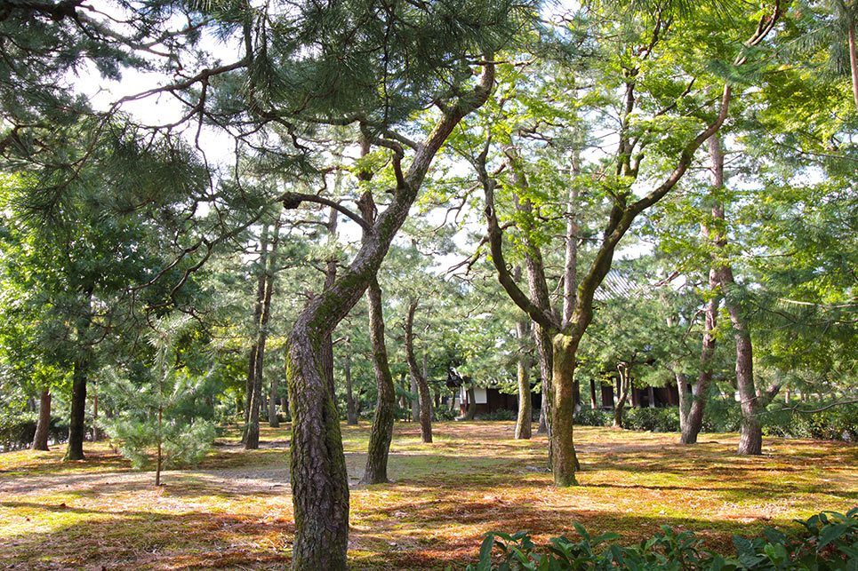建仁寺内の林
