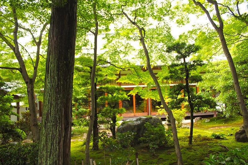 正覚庵の庭から見るお寺